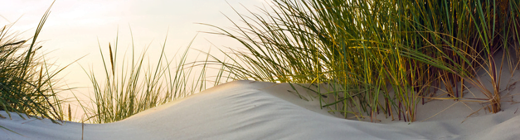 Image of Peaceful Sand Dunes